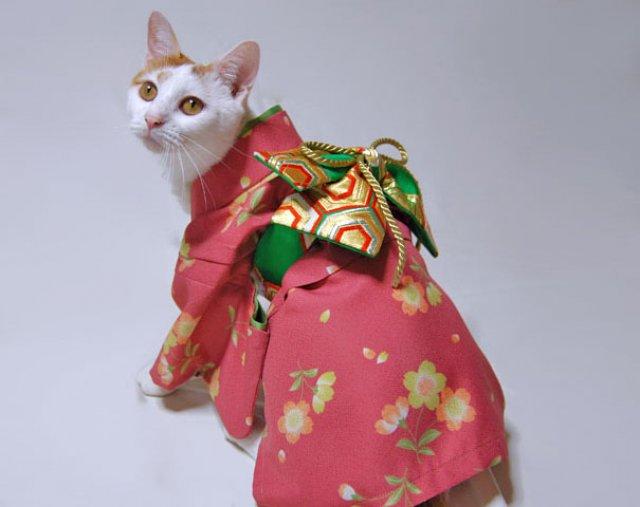 Pisicile in chimonouri fac furori in Japonia - Poza 9