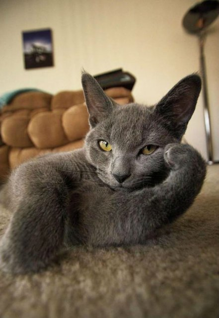Cum pozeaza 12 animalute ca niste modele profesioniste