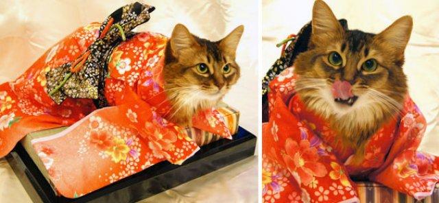 Pisicile in chimonouri fac furori in Japonia - Poza 5