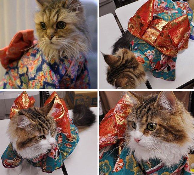 Pisicile in chimonouri fac furori in Japonia - Poza 7