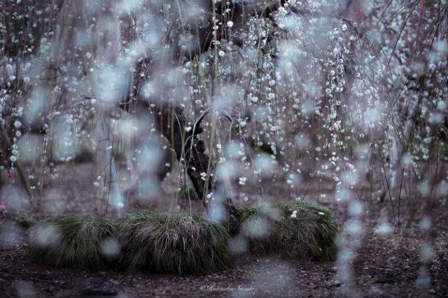 Primavara din Japonia, in cele mai frumoase poze - Poza 2