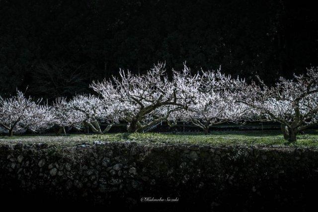Primavara din Japonia, in cele mai frumoase poze - Poza 3