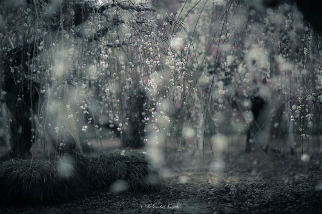 Primavara din Japonia, in cele mai frumoase poze - Poza 5