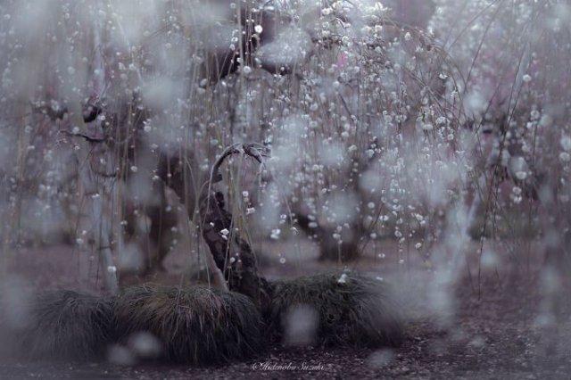 Primavara din Japonia, in cele mai frumoase poze - Poza 7
