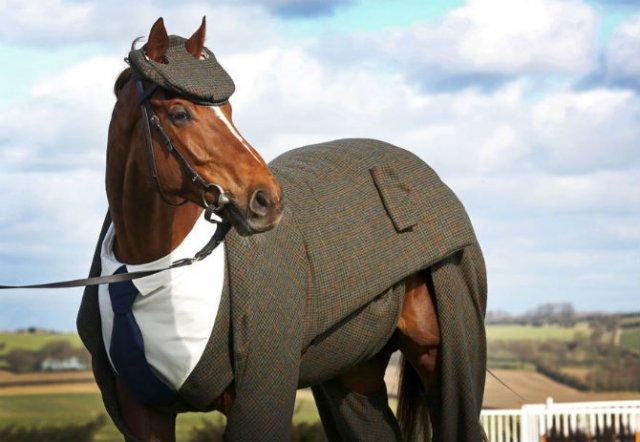 Un cal la patru ace - Poza 1