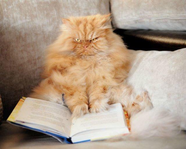 Poze haioase cu pisici expresive - Poza 8