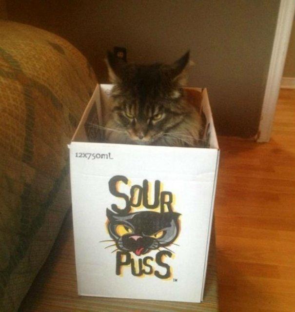 Poze haioase cu pisici expresive - Poza 9