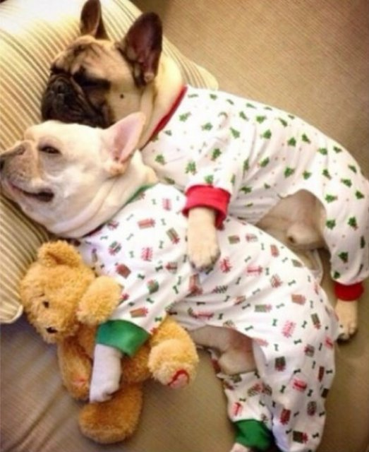 Caini simpatici in pijamale - Poza 14