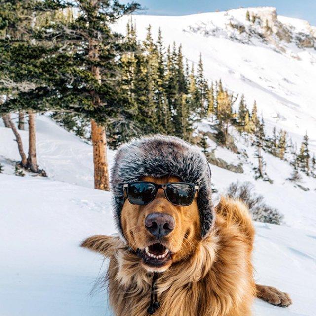 Aventurile epice ale lui Aspen, retrieverul hoinar - Poza 11