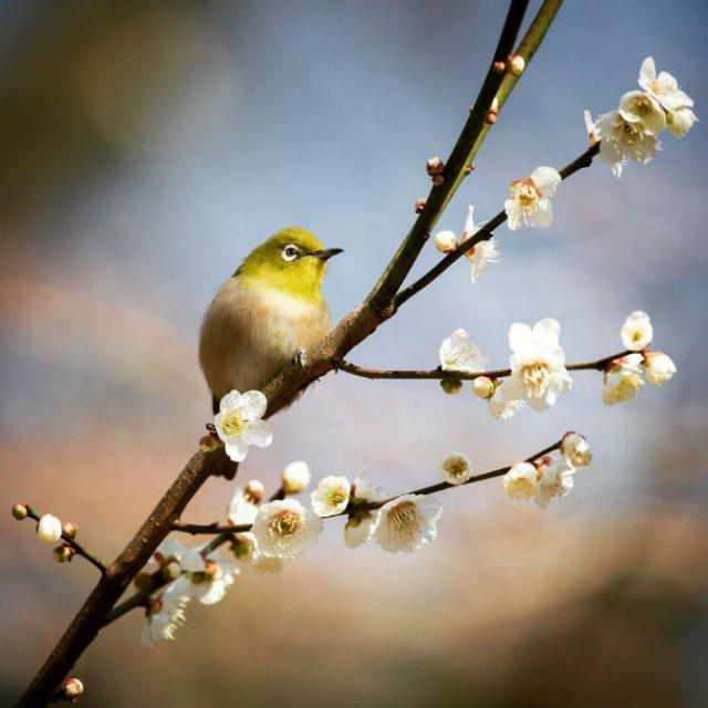 Natura si poezie, in poze superbe - Poza 1