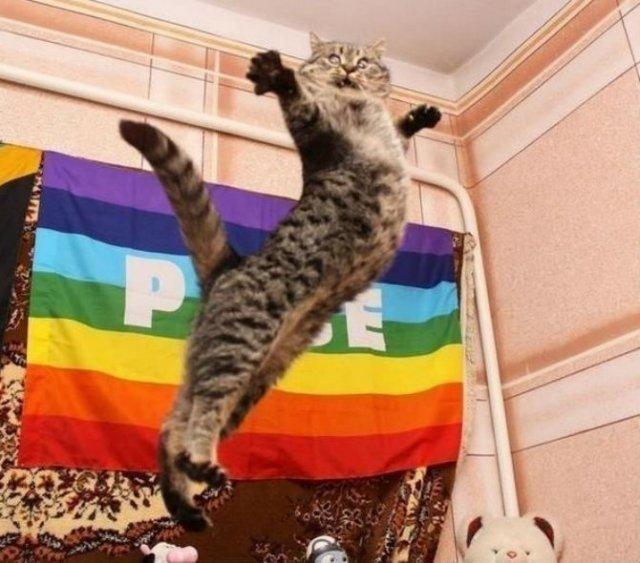 Poze haioase cu pisici expresive - Poza 1