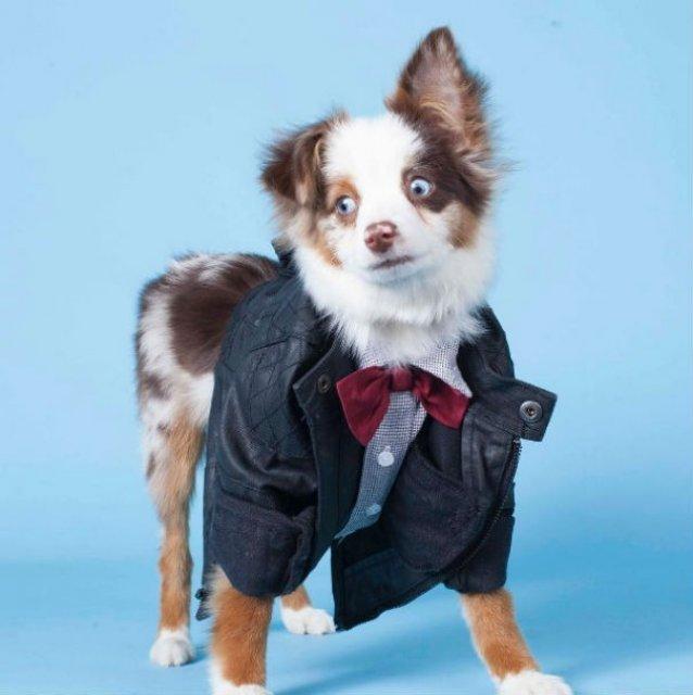 Cei mai haiosi caini cocheti, in poze cu stil - Poza 17