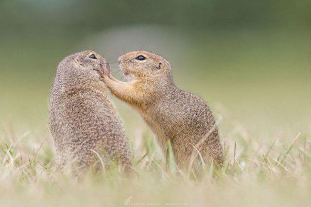 Rozatoare adorabile, intr-un pictorial haios - Poza 9