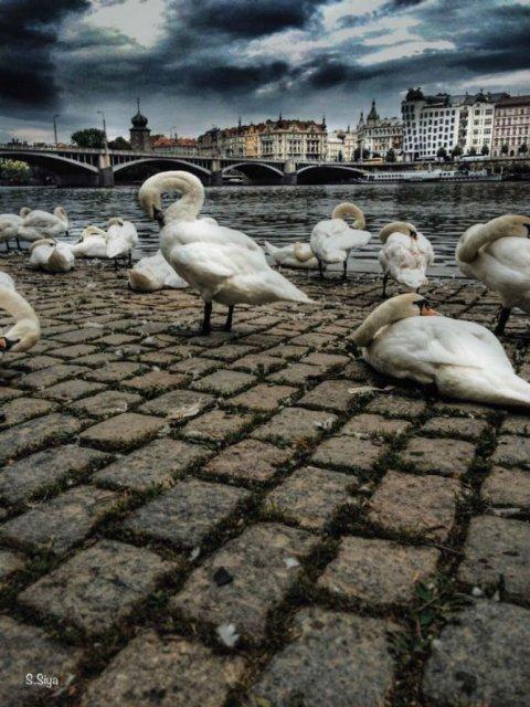 Praga, in ipostaze superbe - Poza 6