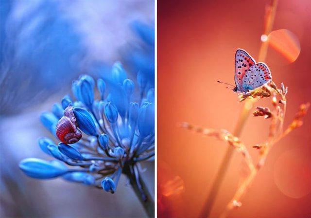 Lumea de basm a insectelor, in fotografii macro - Poza 10