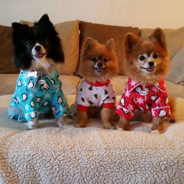 Caini simpatici in pijamale - Poza 11