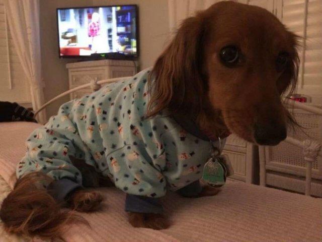 Caini simpatici in pijamale - Poza 12