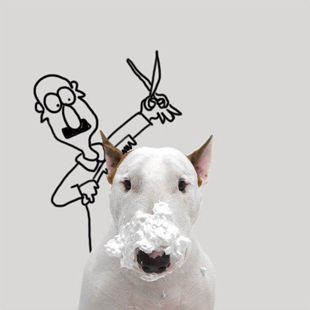 Bull Terrierul Jimmy Choo, intr-un pictorial trasnit - Poza 19