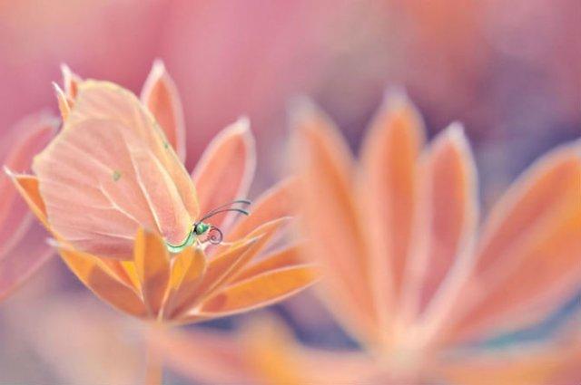 Lumea de basm a insectelor, in fotografii macro - Poza 8