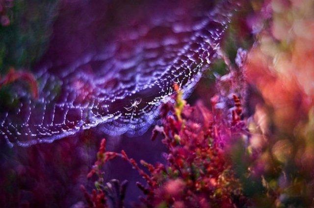 Lumea de basm a insectelor, in fotografii macro - Poza 9