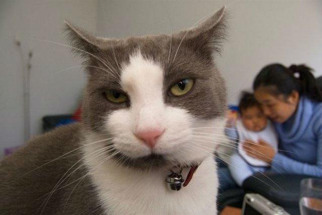 Poze haioase cu pisici expresive - Poza 2