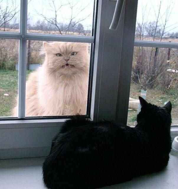 Poze haioase cu pisici expresive - Poza 6