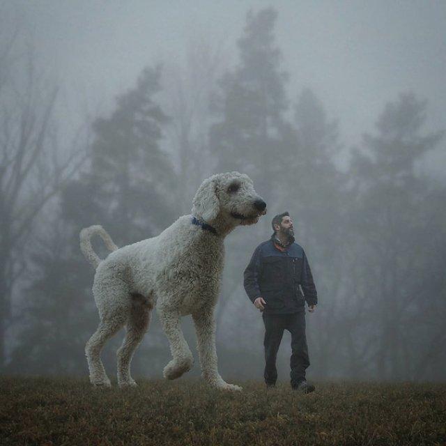 Juji, uriasul prieten din viata unui fotograf - Poza 11