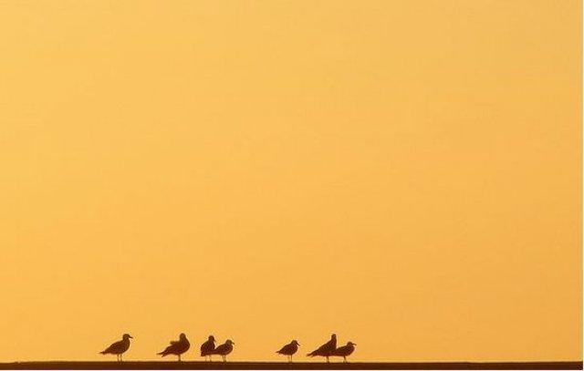 25 de poze minimaliste, dar de mare efect! - Poza 12