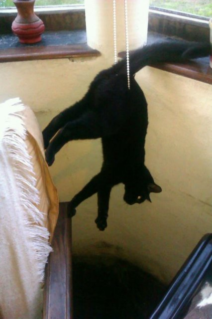 Poze haioase cu pisici neastamparate - Poza 10