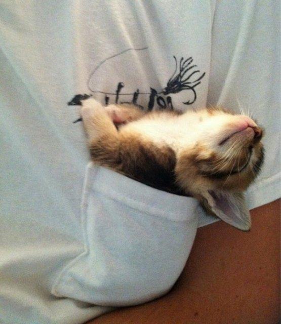 Cele mai haioase pozitii in care dorm animalele - Poza 13