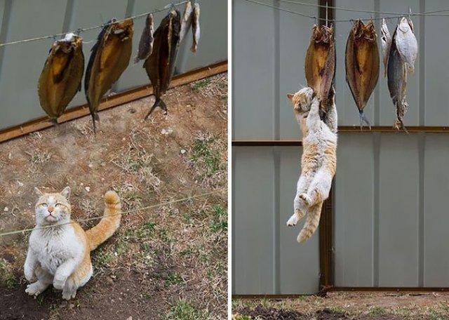 Pisici hoate, prinse in actiune - Poza 9