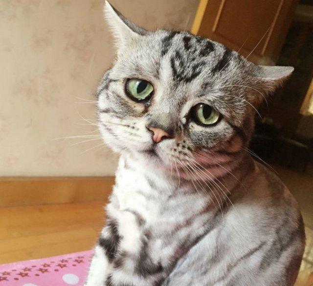 Poze haioase cu pisici expresive - Poza 4
