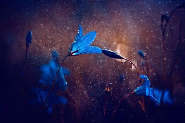 Lumea de basm a insectelor, in fotografii macro - Poza 7
