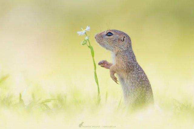 Rozatoare adorabile, intr-un pictorial haios - Poza 8