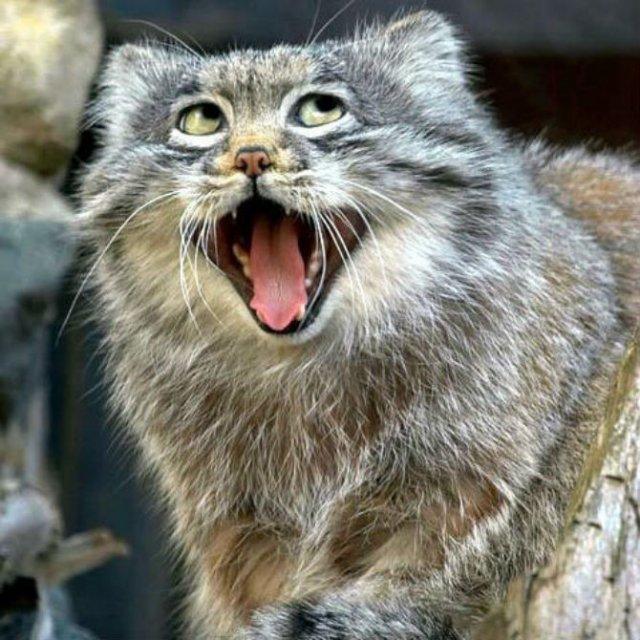 Poze haioase cu pisici expresive - Poza 5