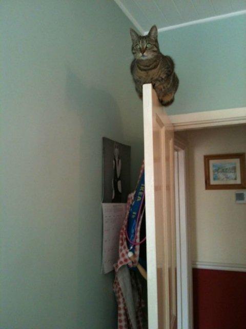 Poze haioase cu pisici neastamparate - Poza 7
