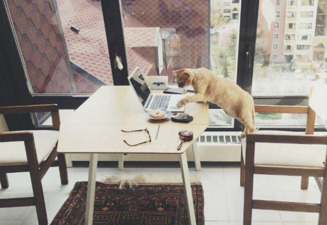 Poze haioase cu pisici neastamparate - Poza 8