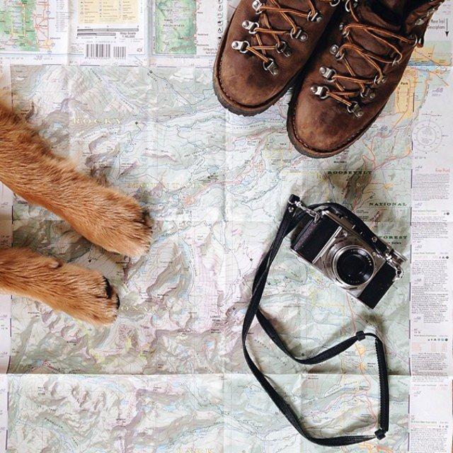 Aventurile epice ale lui Aspen, retrieverul hoinar - Poza 9