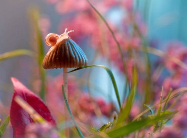 Lumea de basm a insectelor, in fotografii macro - Poza 2