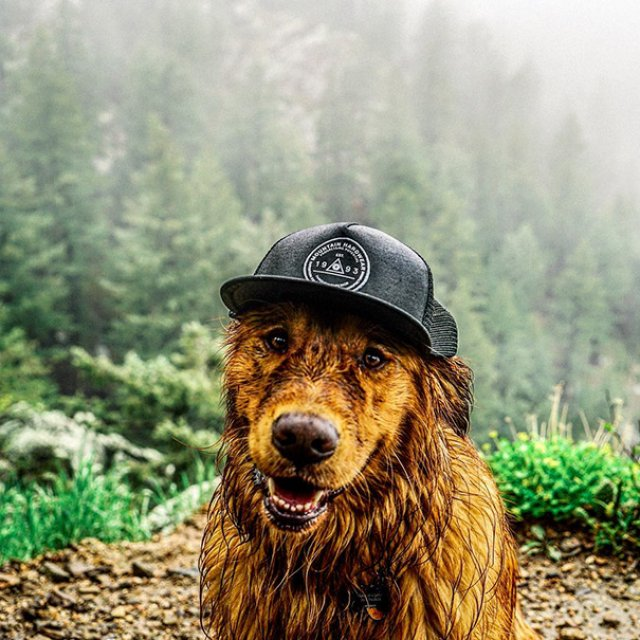 Aventurile epice ale lui Aspen, retrieverul hoinar - Poza 8