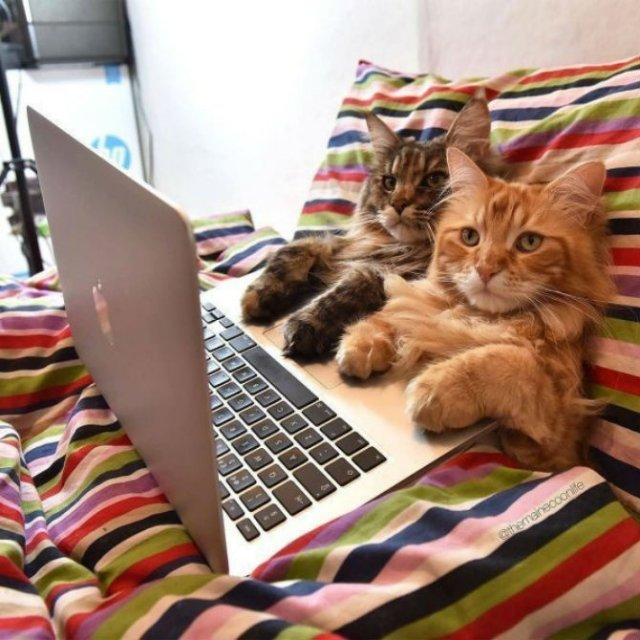 Poze haioase cu pisici neastamparate - Poza 1