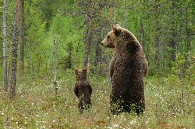Lumea animalelor, in poze de familie - Poza 20