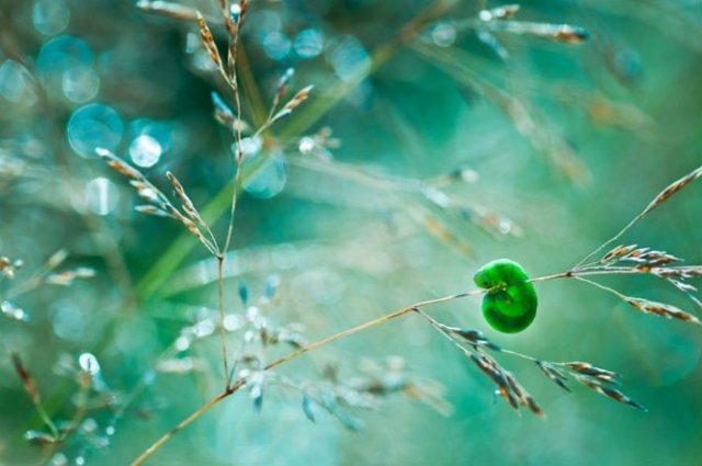 Lumea de basm a insectelor, in fotografii macro - Poza 4