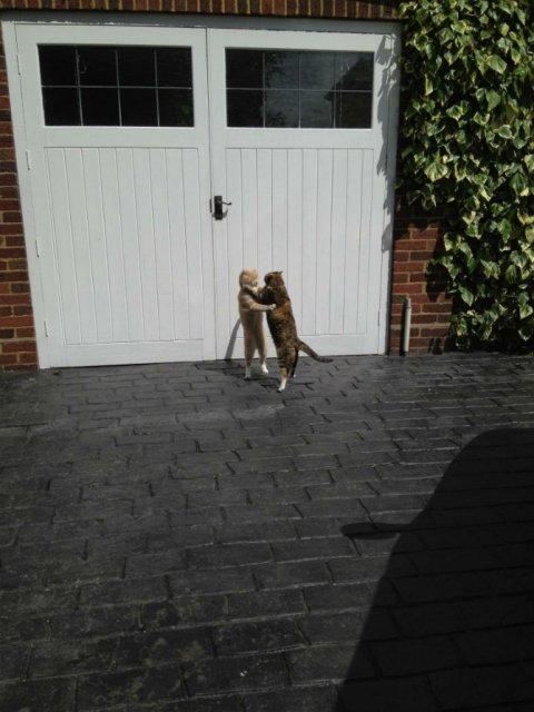 Poze haioase cu pisici neastamparate - Poza 6