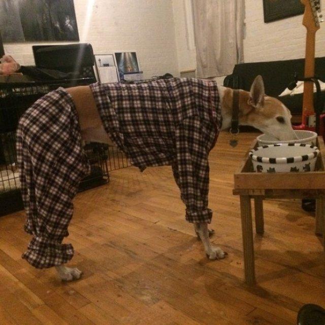 Caini simpatici in pijamale - Poza 10