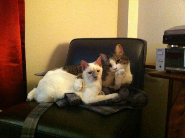 20+ Poze amuzante cu pisici naravase - Poza 19