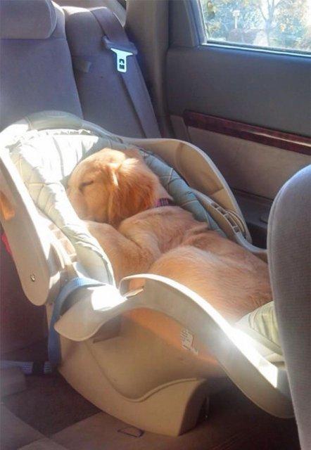Cele mai haioase pozitii in care dorm animalele - Poza 22