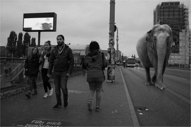 Invazia animalelor salbatice, intr-o societate toleranta - Poza 13
