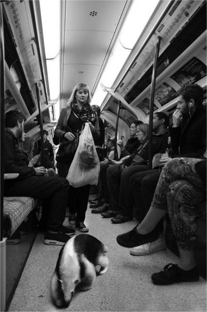 Invazia animalelor salbatice, intr-o societate toleranta - Poza 14