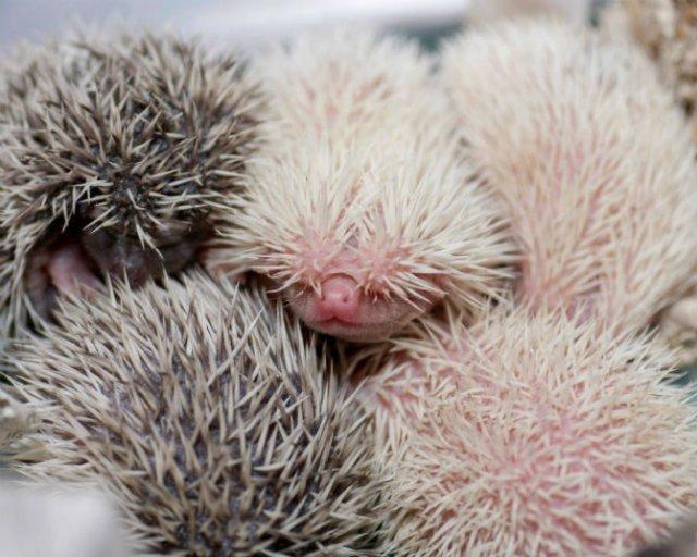 Cele mai simpatice animale, in 15 poze adorabile - Poza 4